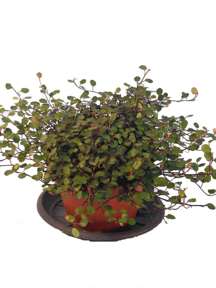 Zimmerpflanzen warme wohnzimmer raum und m beldesign for Raumgestaltung mit zimmerpflanzen