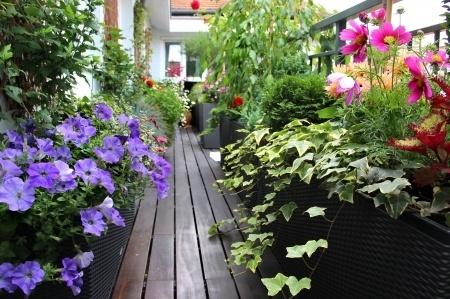 Balkonpflanzen Halbschattig Pflanzenklick