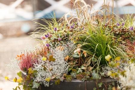 Herbstpflanzen Pflanzenklick