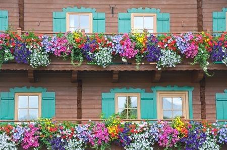 Balkonpflanzen Hangepflanzen Pflanzenklick