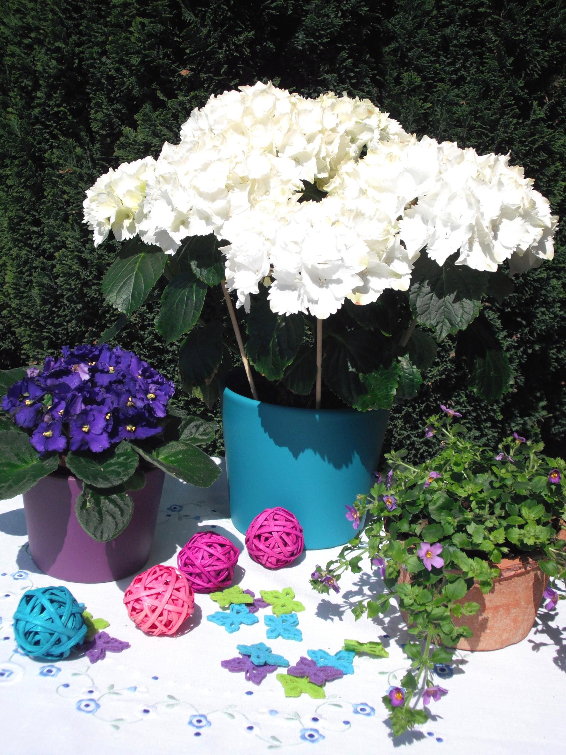 zimmerpflanzen mit der bl tenfarbe wei pflanzenklick. Black Bedroom Furniture Sets. Home Design Ideas